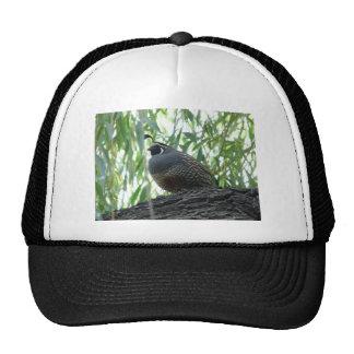 male quail trucker hat