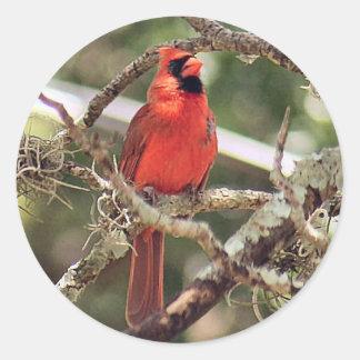 Male Red Cardinal Round Stickers Round Sticker