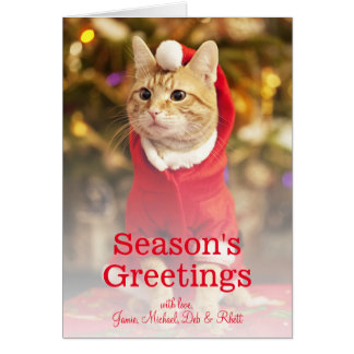 Male red cat wearing santa costume card