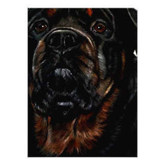 Male Rottweiler Announcements