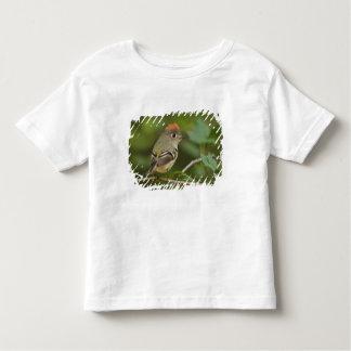 Male Ruby-crowned Kinglet, Regulus calendula Toddler T-shirt