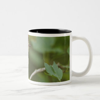 Male Ruby-crowned Kinglet, Regulus calendula Two-Tone Coffee Mug