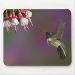 Male Ruby throated Hummingbird, Archilochus 2 Mousepads