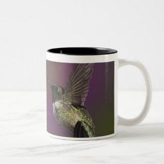 Male Ruby throated Hummingbird, Archilochus 2 Two-Tone Coffee Mug
