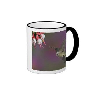 Male Ruby throated Hummingbird, Archilochus 2 Ringer Coffee Mug