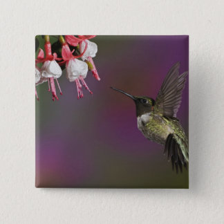 Male Ruby throated Hummingbird, Archilochus 2 Pinback Button