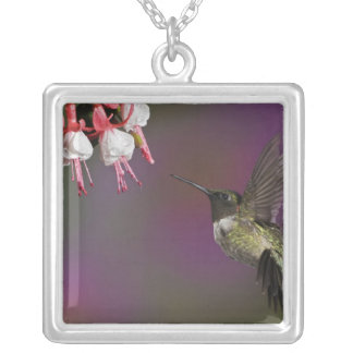 Male Ruby throated Hummingbird, Archilochus 2 Silver Plated Necklace