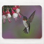 Male Ruby throated Hummingbird, Archilochus Mouse Pad
