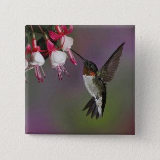 Male Ruby throated Hummingbird, Archilochus Pinback Button