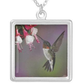 Male Ruby throated Hummingbird, Archilochus Square Pendant Necklace