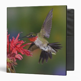 Male Ruby-throated Hummingbird feeding on Vinyl Binders