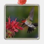 Male Ruby-throated Hummingbird feeding on Square Metal Christmas Ornament
