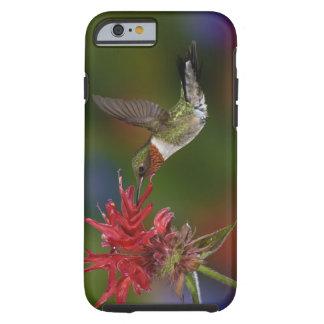 Male Ruby-throated Hummingbird feeding on Tough iPhone 6 Case