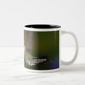 Male Ruby-throated Hummingbird feeding on Two-Tone Coffee Mug