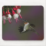 Male Ruby-throated Hummingbird in flight. Mouse Pad