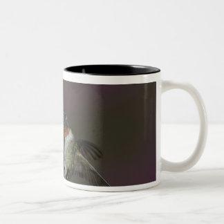 Male Ruby-throated Hummingbird in flight. Two-Tone Coffee Mug