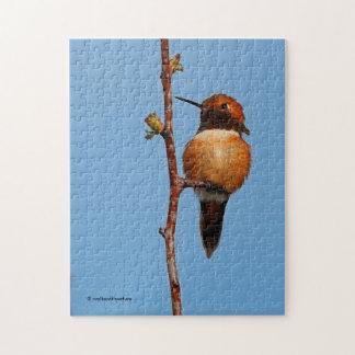 Male Rufous Hummingbird in the Spotlight Jigsaw Puzzle
