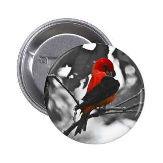 Male Scarlet Tanager Button