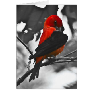 Male Scarlet Tanager Card