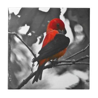 Male Scarlet Tanager Ceramic Tiles