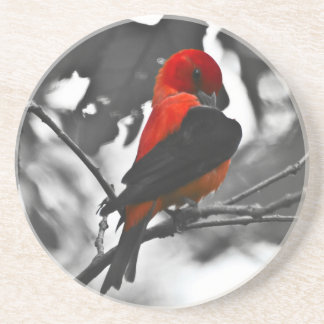 Male Scarlet Tanager Drink Coaster