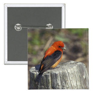 Male Scarlet Tanager in breeding plumage 2 Inch Square Button