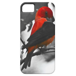 Male Scarlet Tanager iPhone SE/5/5s Case
