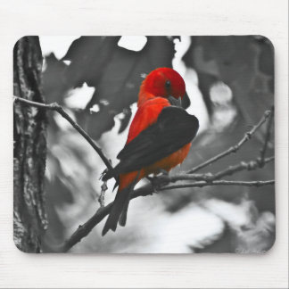 Male Scarlet Tanager Mouse Pad