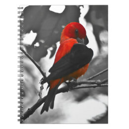 Male Scarlet Tanager Notebook