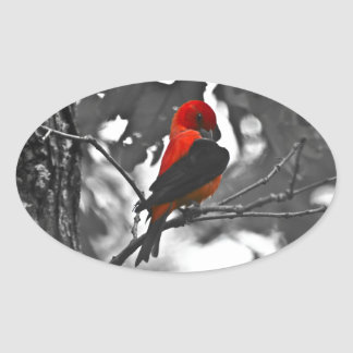 Male Scarlet Tanager Oval Sticker