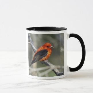 Male Scarlet Tanager, Piranga olivacea Mug