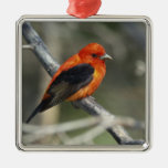 Male Scarlet Tanager, Piranga olivacea Square Metal Christmas Ornament