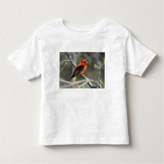 Male Scarlet Tanager, Piranga olivacea Toddler T-shirt