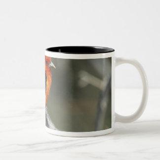 Male Scarlet Tanager, Piranga olivacea Two-Tone Coffee Mug
