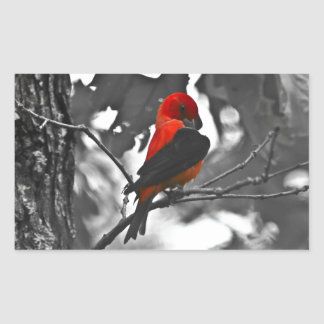 Male Scarlet Tanager Rectangular Sticker