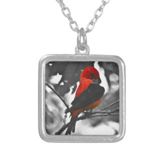 Male Scarlet Tanager Silver Plated Necklace