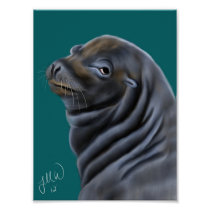Male Sea Lion Poster