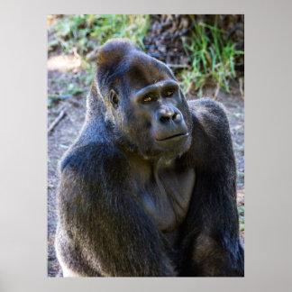 Male Silverback Gorilla Print