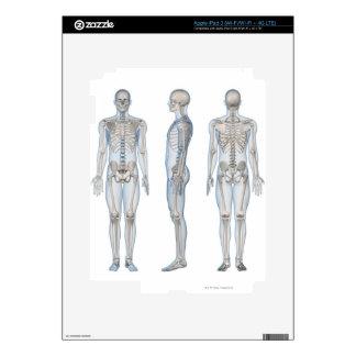 Male Skeleton 2 iPad 3 Decal
