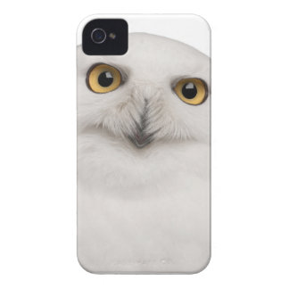 Male Snowy Owl (Bubo scandiacus) is a large owl Case-Mate iPhone 4 Case