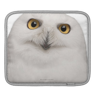 Male Snowy Owl (Bubo scandiacus) is a large owl iPad Sleeve