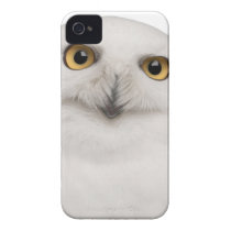 male Snowy Owl (Bubo scandiacus) is a large owl iPhone 4 Case