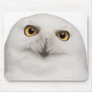 male Snowy Owl (Bubo scandiacus) is a large owl Mouse Pad