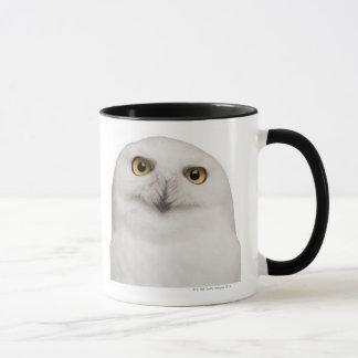 Male Snowy Owl (Bubo scandiacus) is a large owl Mug