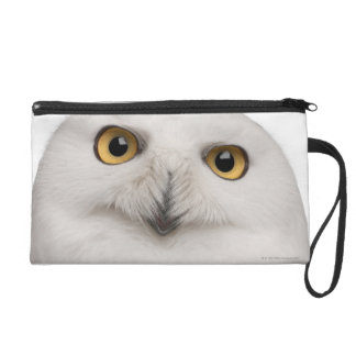 Male Snowy Owl (Bubo scandiacus) is a large owl Wristlet Clutches
