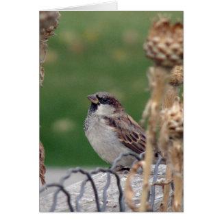Male Sparrow Card