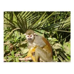 Male squirrel monkey postcard