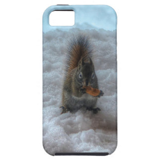 Male Squirrel Standing in Snow Wildlife Photo iPhone 5 Cases