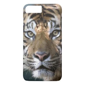 Male Sumatran Tiger (Panthera tigris sumatrae) iPhone 8 Plus/7 Plus Case