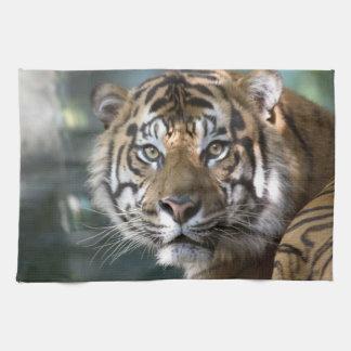 Male Sumatran Tiger (Panthera tigris sumatrae) Kitchen Towel